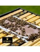 Escape abejas redondo de plástico